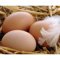 Яйцо куриное, домашнее (10 шт)