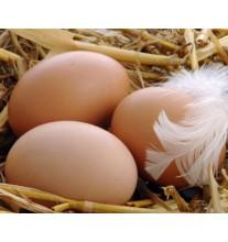 Яйцо куриное, домашнее (1 шт)