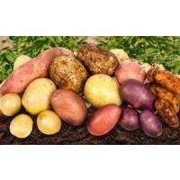 Картофель (за 1 кг)